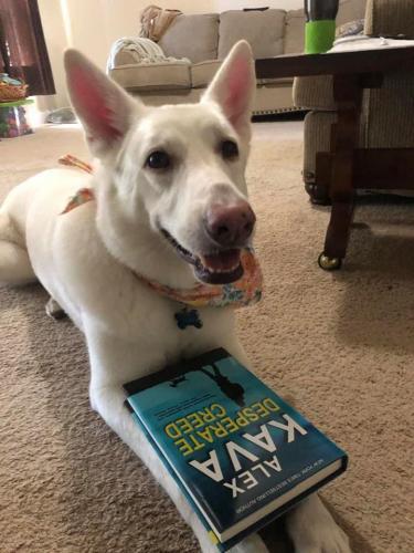 Amy's Shadow wins a blue book bag!